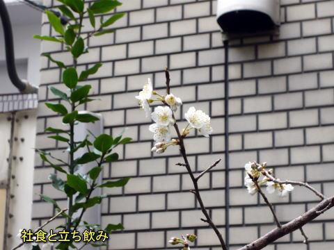 2010_0301_115721p112016111